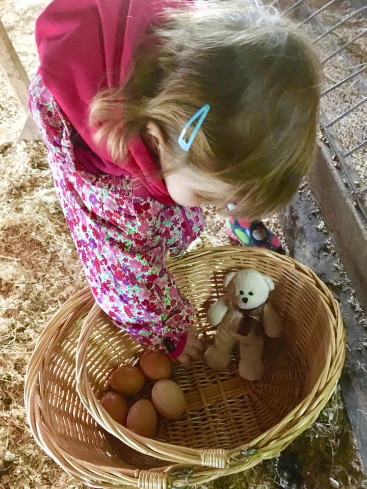 Hen coop at the Dandelion Hideaway. Twins collecting eggs