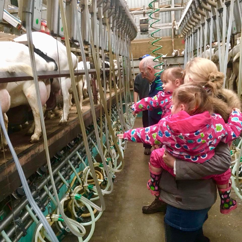 goat milking parlour at the Dandelion Hideaway
