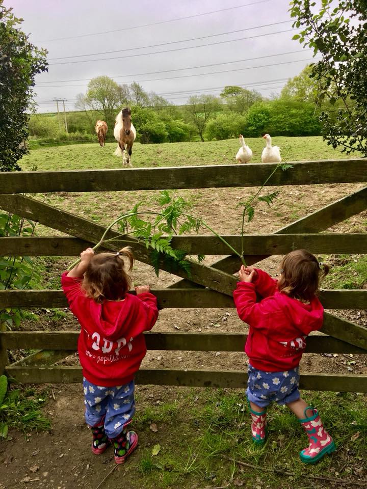 The popitha twins at North Bradbury Farm with Farmer Chris feeding the ponies