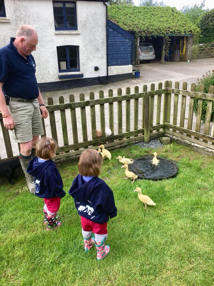 The popitha twins at North Bradbury Farm moving the duckings