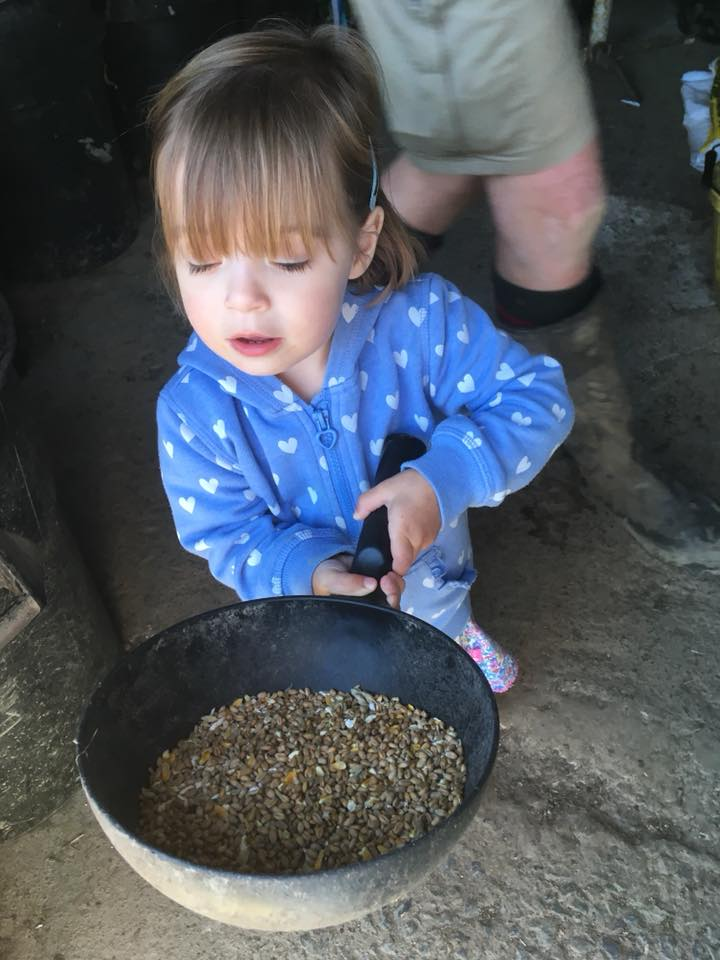 The Popitha Twins are helping Farmer Chris make up the feeds for the animals in the feed room at North Bradbury Farm