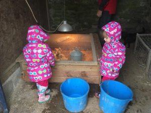 The popitha twins at North Bradbury Farm moving the duckings