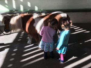 Twins grooming a pony