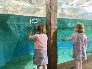 twins looking at the penguins at longleat