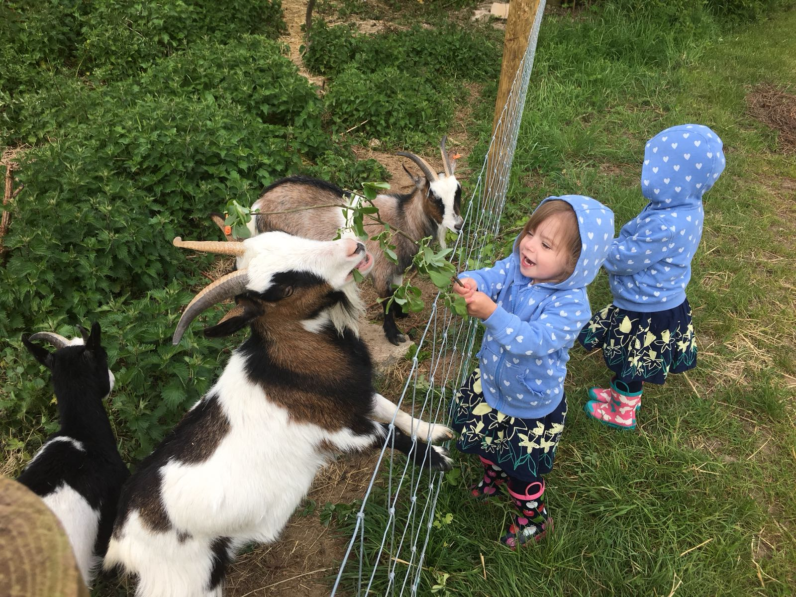 Family travel to Kennel Farm in the New Forest. The Lounge Twins feeding the goats at Kennel farm