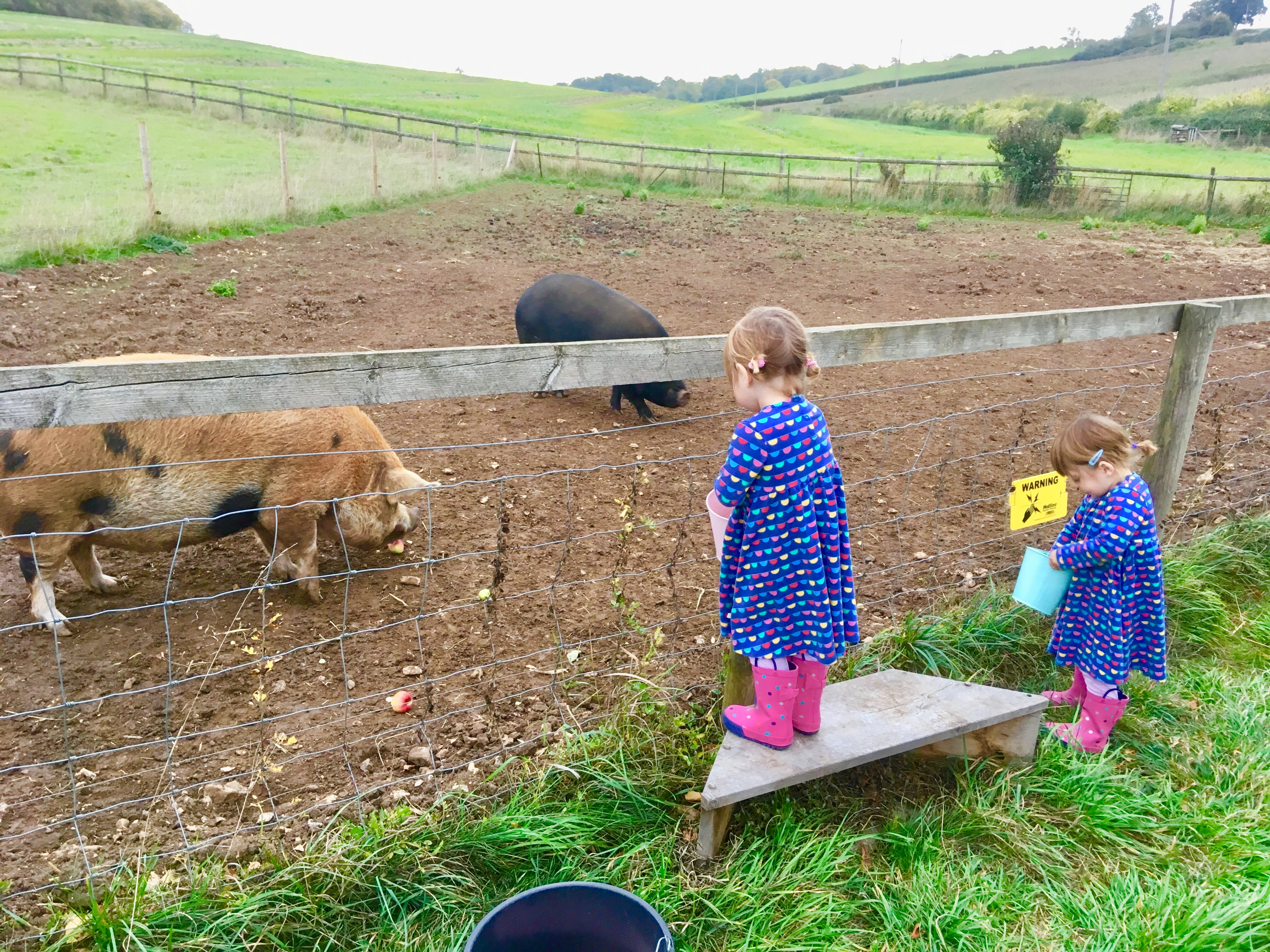 Twins feeding the pigs at Kennel farm