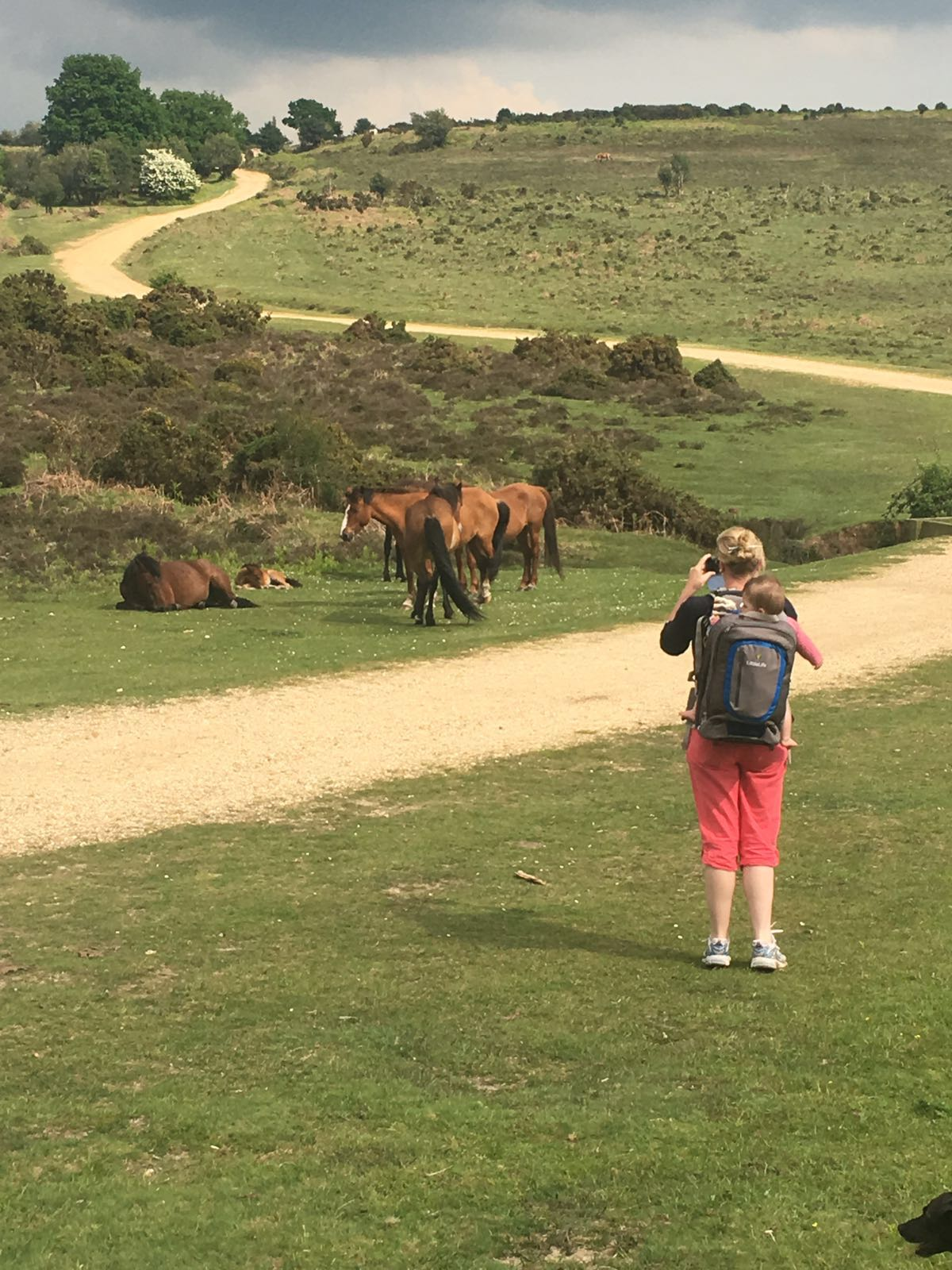 Mother and Baby in the new forest looking at ponies