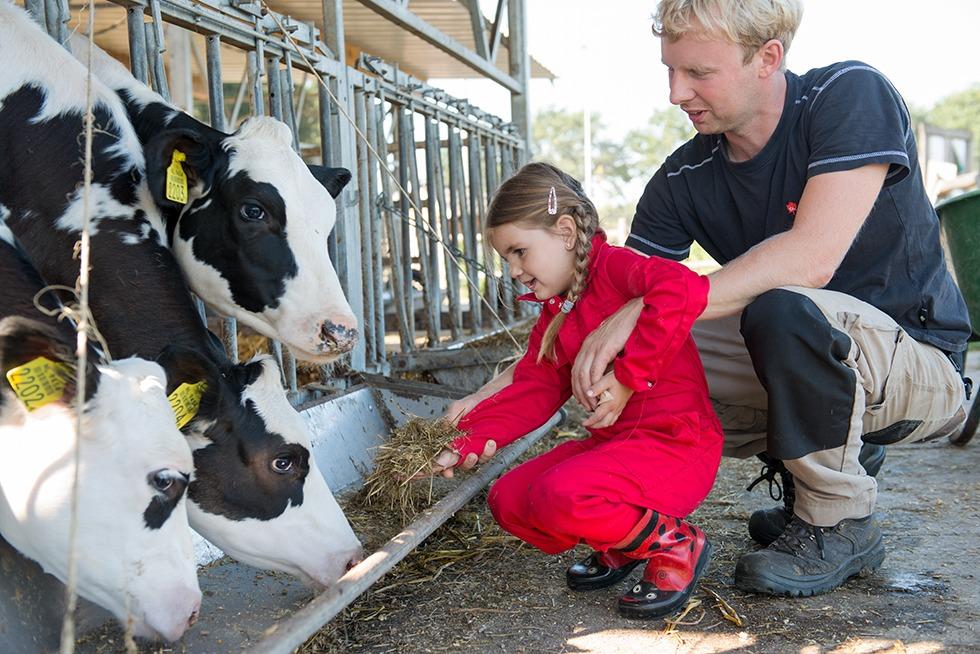 BoeBadDoe farm cow feeding. Top child friendly holidays in Holland