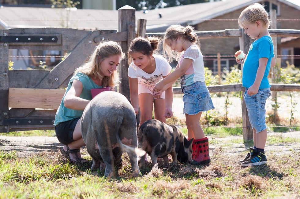 BoeBadDoe farm pigs. Top child friendly holidays in Holland