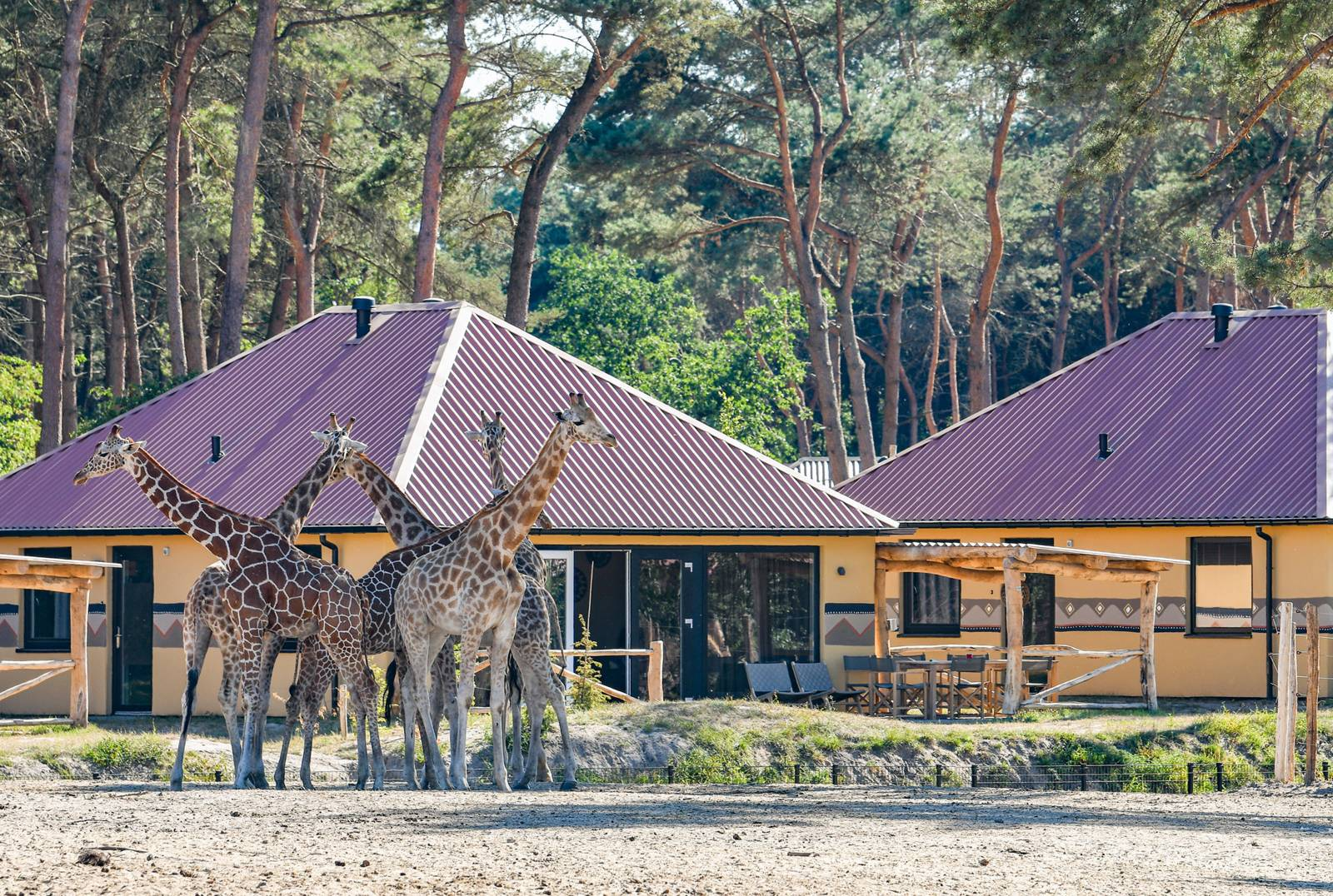 Beekse Bergan Safari resort. Top child friendly holidays in Holland