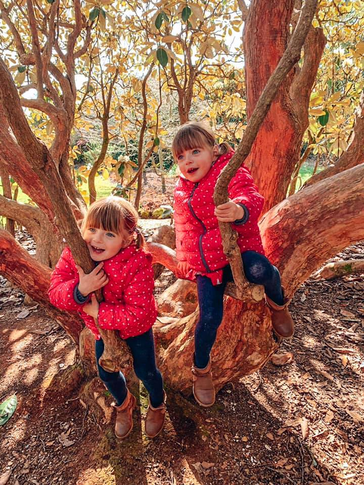 near Spindle cottage. A family friendly cottage in the New Forest with Baby Friendly Boltholes.
