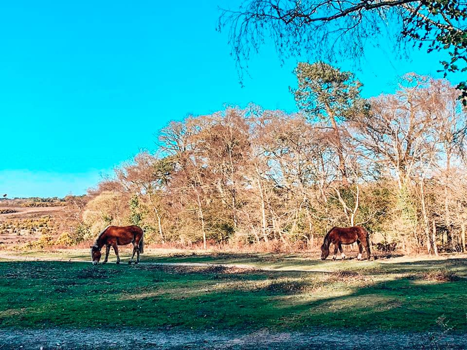 New Forest ponies whilst staying in a family friendly cottage; Spindle Cottage with Baby Friendly Boltholes