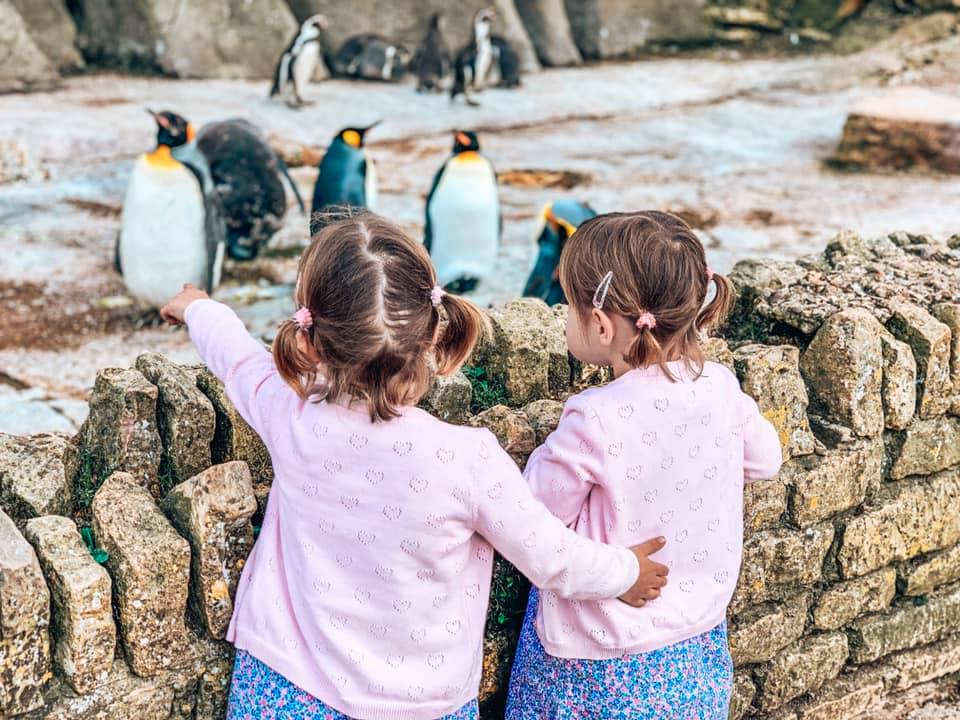 Days out in the Cotswolds at Birdland, Twins looking at the penguins