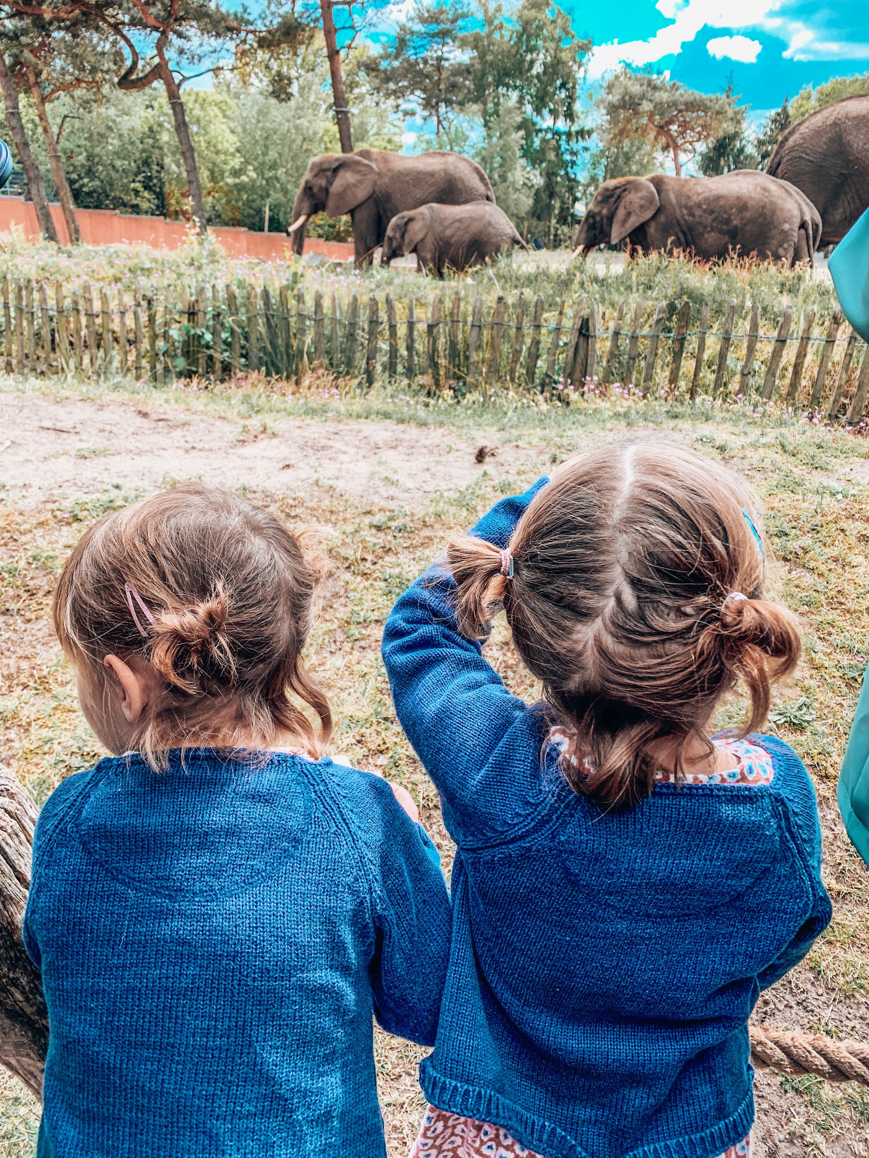 Twins watching the elephants at Beekse Bergen safari park. Places to visit in Holland