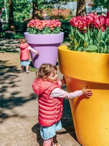 Keukonhof Tulip gardens in Holland. twins trying to life a giant flower pot. A great place to visit in Holland with kids.