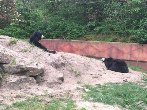 Bears at Beeske Bergen Safari Park, Holland