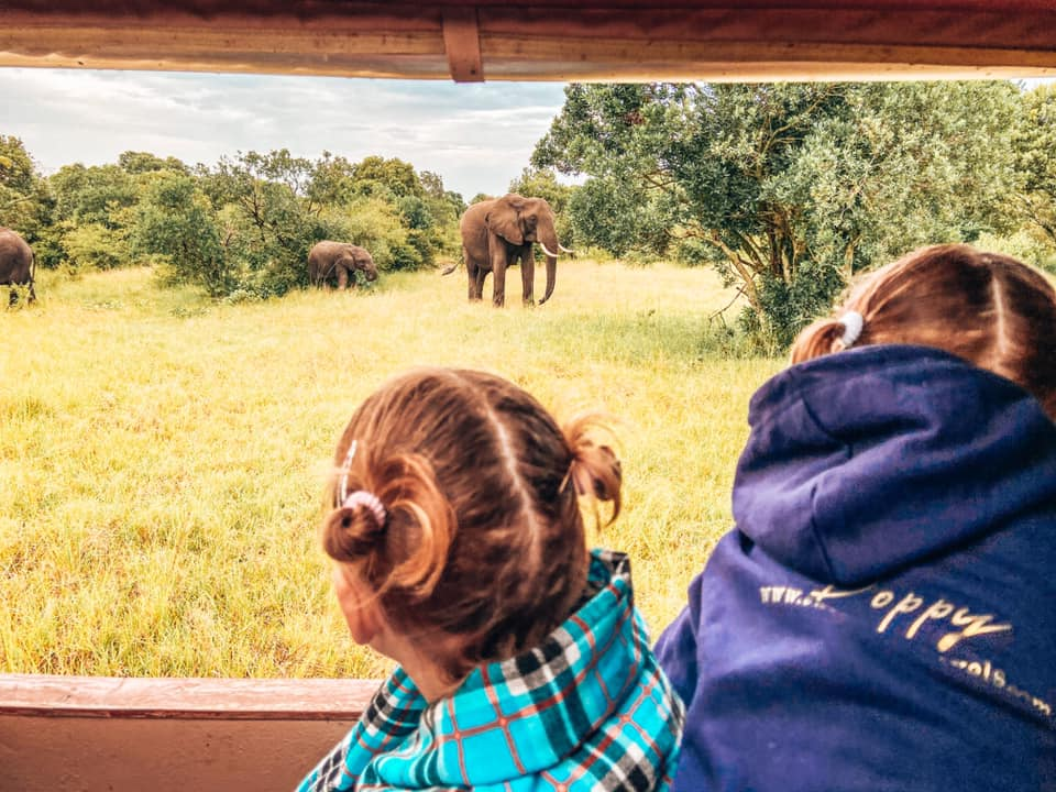 two children looking our of a safari jeep window at an elephant