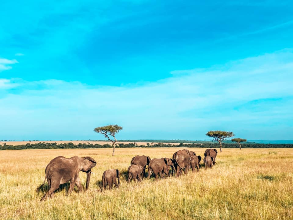 image of a herd and family of elephants