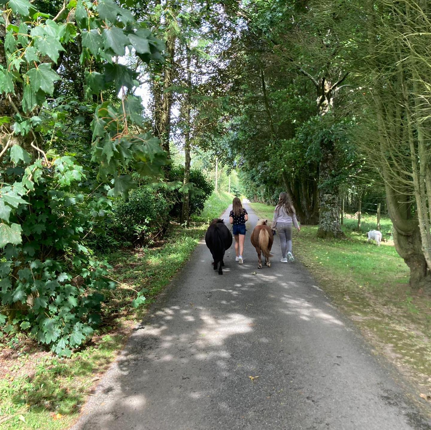 Tree covered driveway with two young girls leading shetland ponies