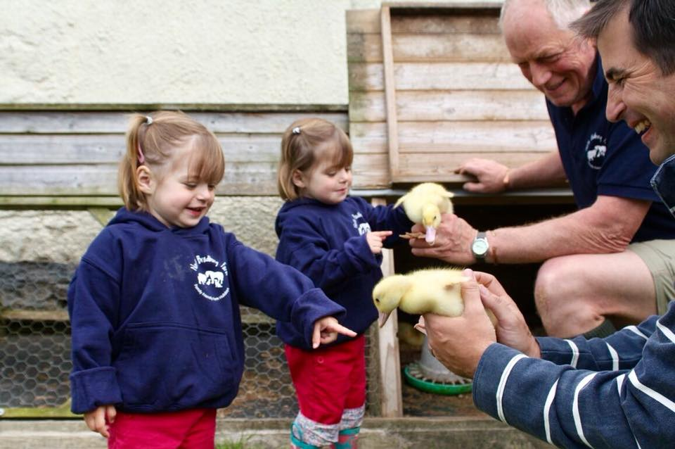 two children stroking two ducklings which are being held by adults