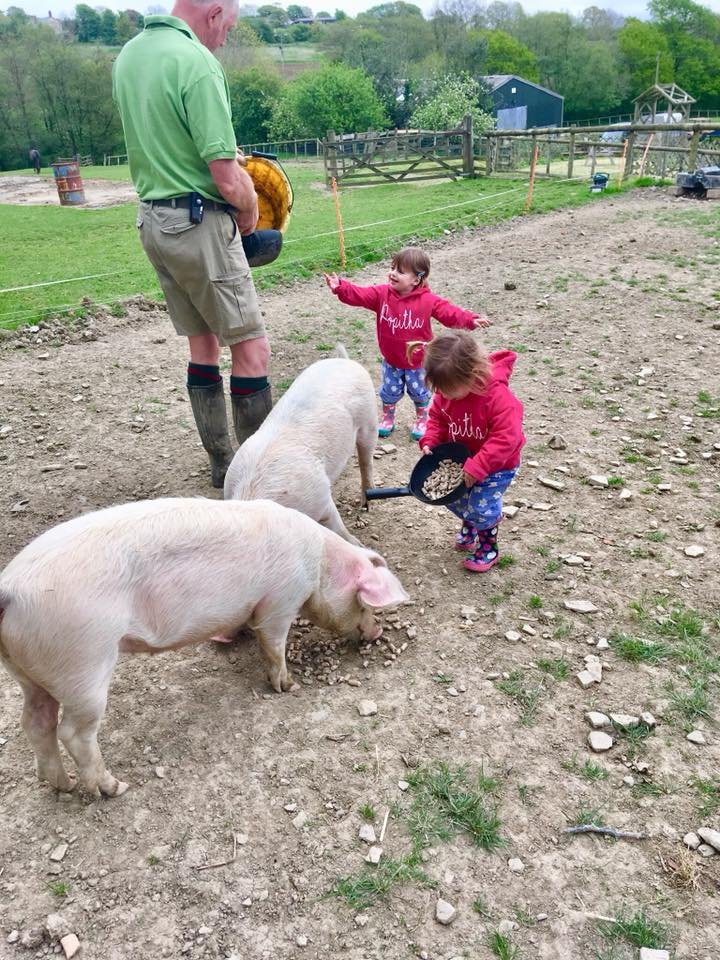 two children feeding two pink pigs from feeders