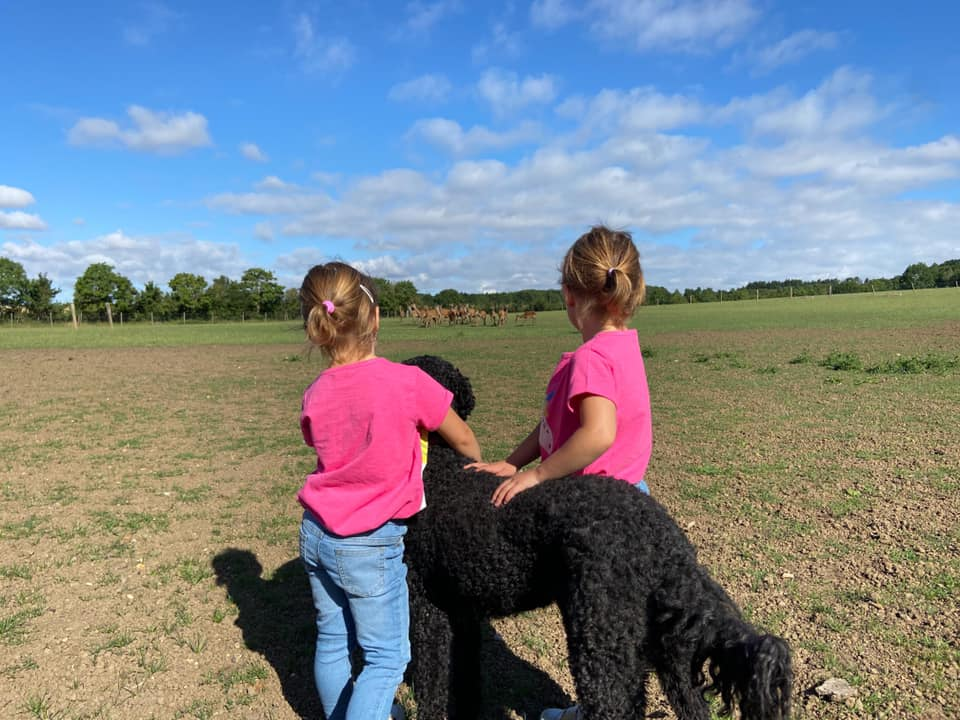 two children standing with a black dog looking at a heard of deer