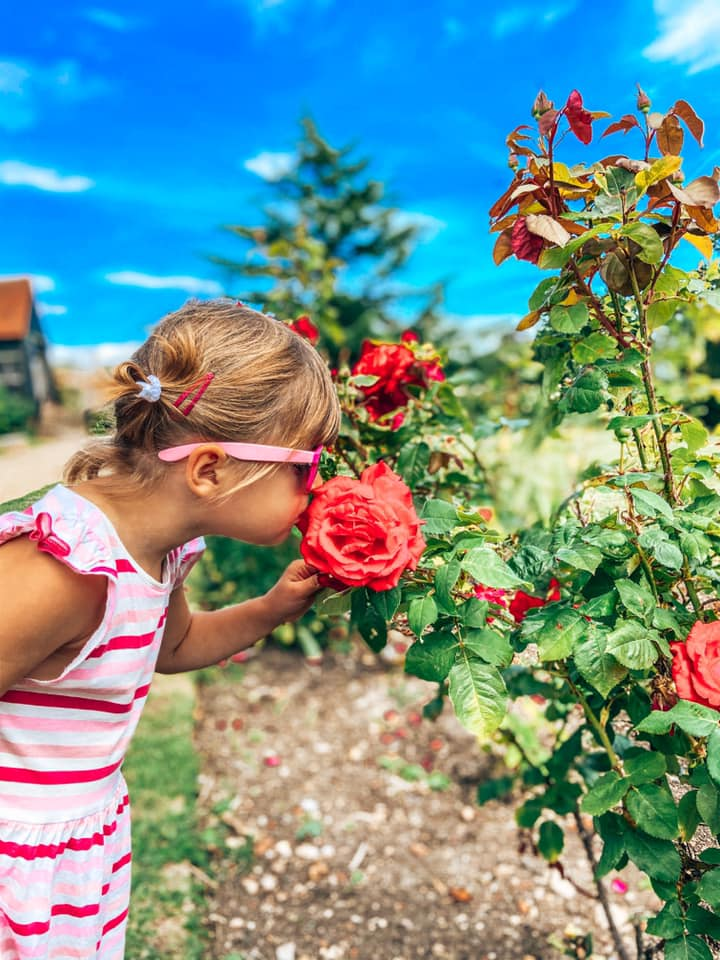 girls smelling red roses in garden