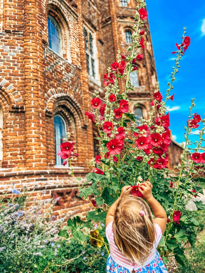 toddler touching red flower with layer marney tower in the back ground