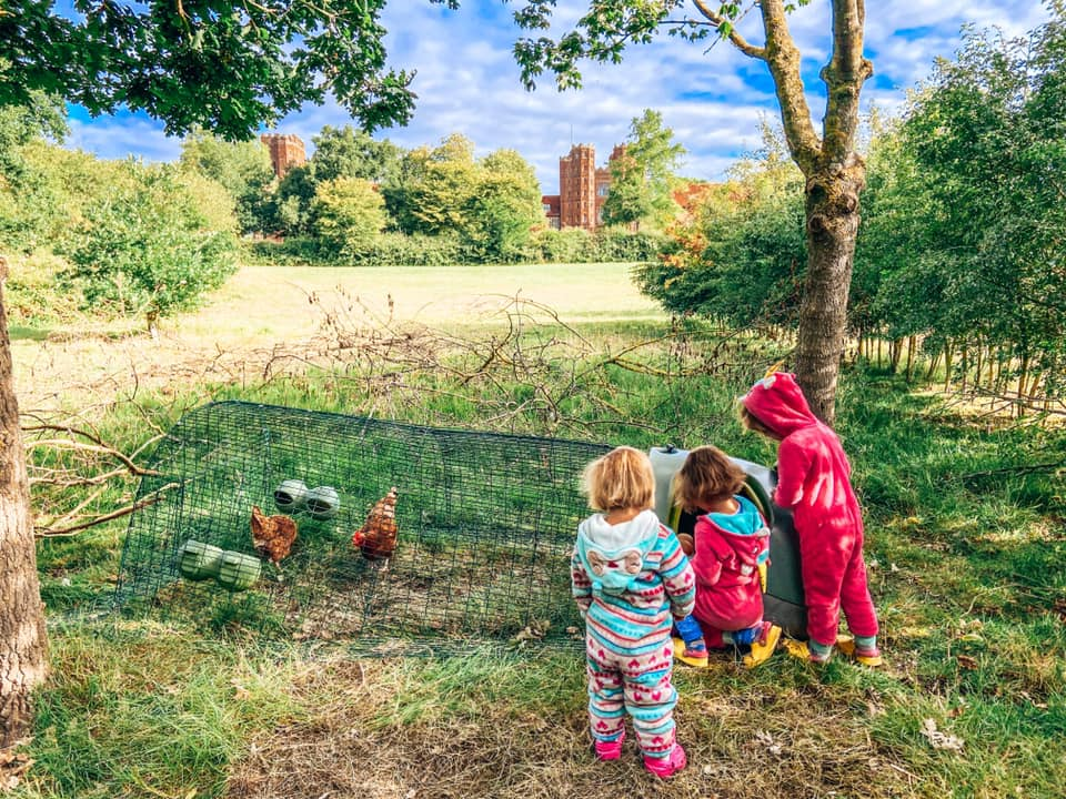 three children looking at chickens in a chicken coop with Layer Marney Tower in the distance