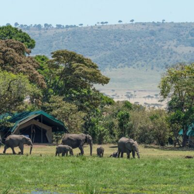 6 Reasons Why You Should Take Your Family to Kenya on Holiday