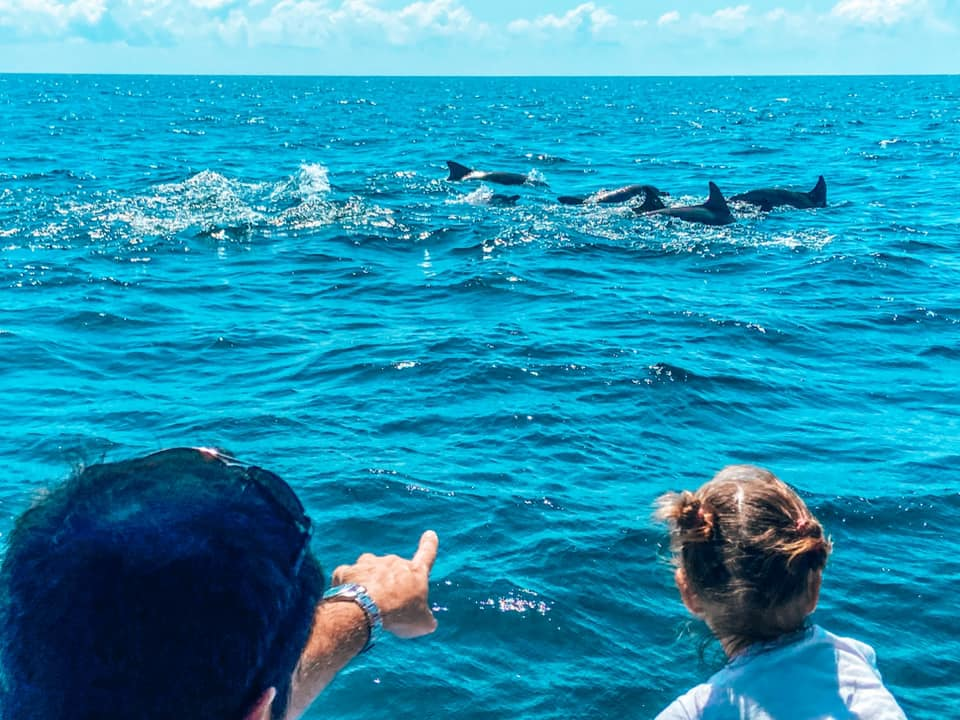 Dolphins swimming wild in the sea with a man and girl watching them from a boat