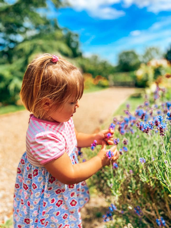 toddler looking at the lavender in the garden