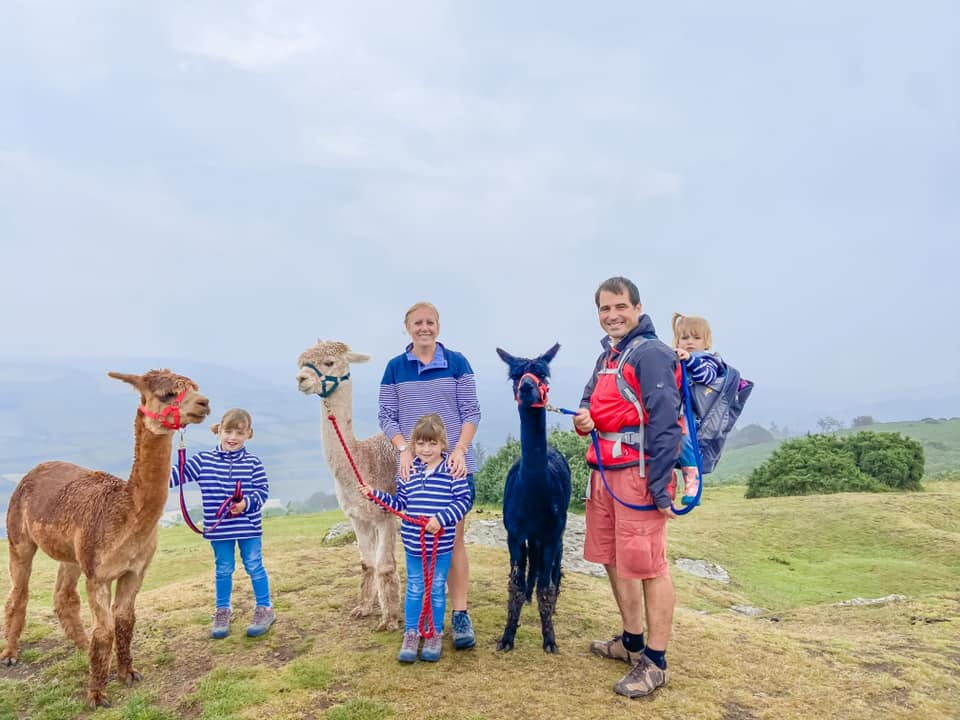 family of 5 standing on the top of a hill with three alpacas. Toddler is in a back pack carrier