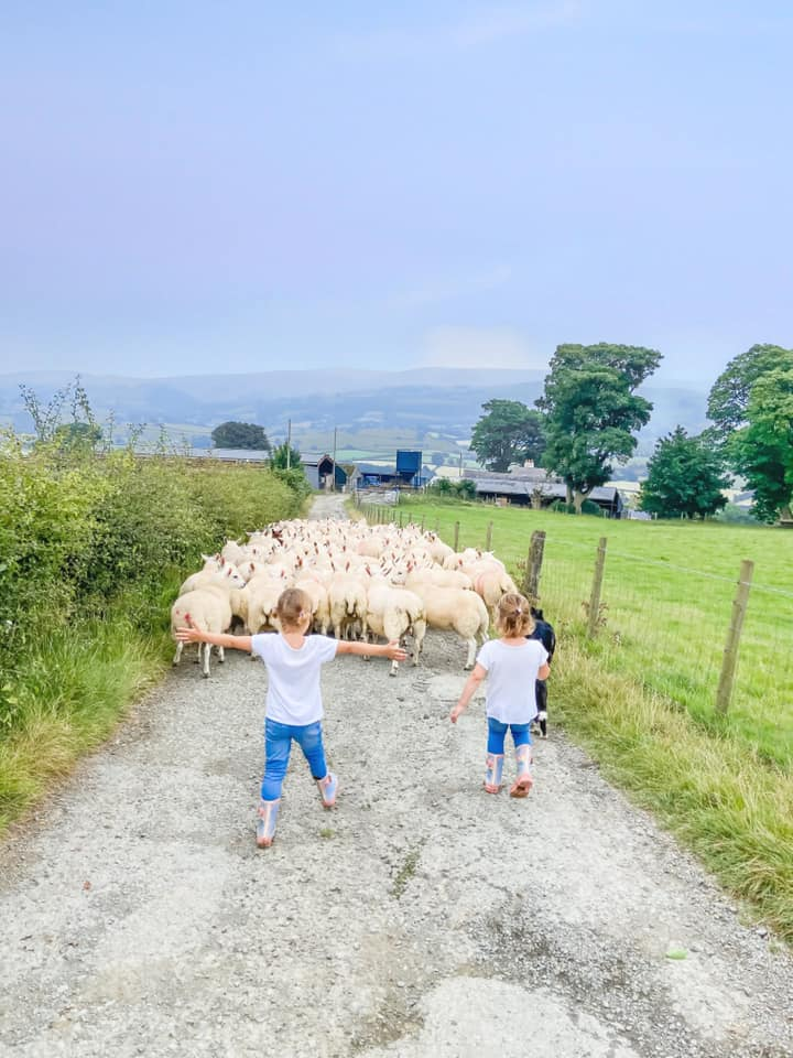 two young girls walking down the lane with a herd of sheep