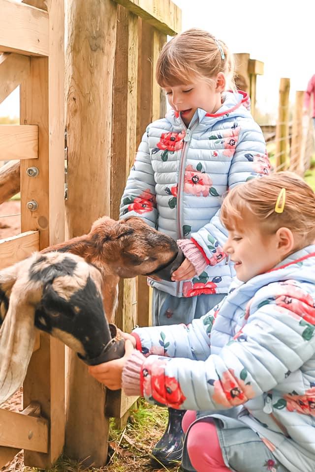 Glynn Barton goat feeding