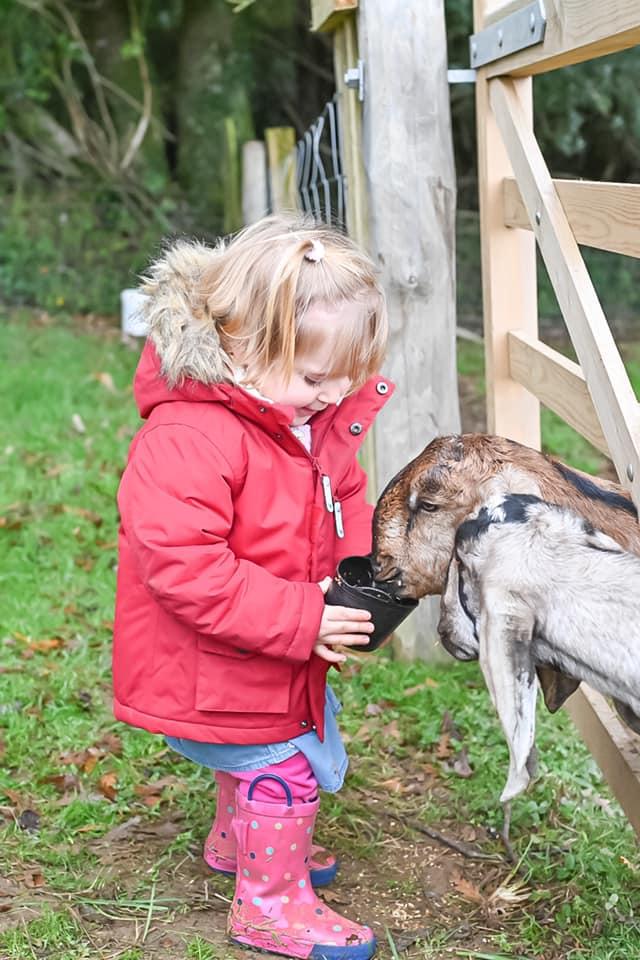 Glynn Barton goats