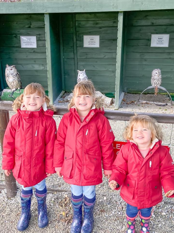 Glynn Barton owl family