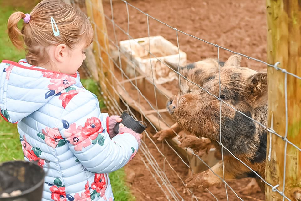 Glynn Barton pigs