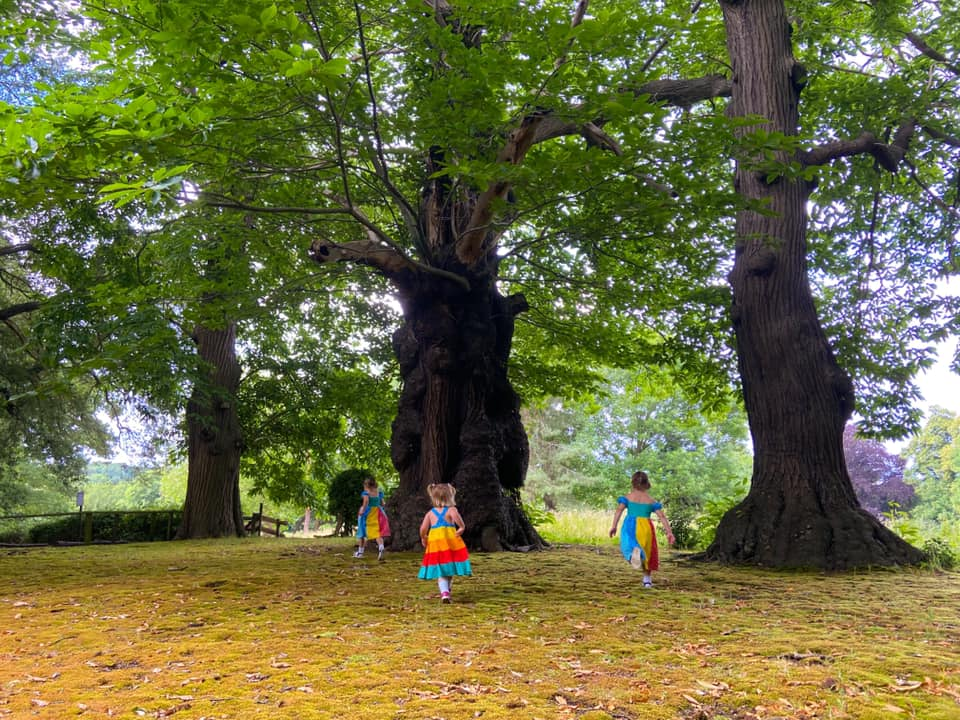 Three children running around some old trees