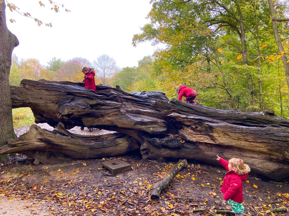 Children climbing on a large fallen log in the woods