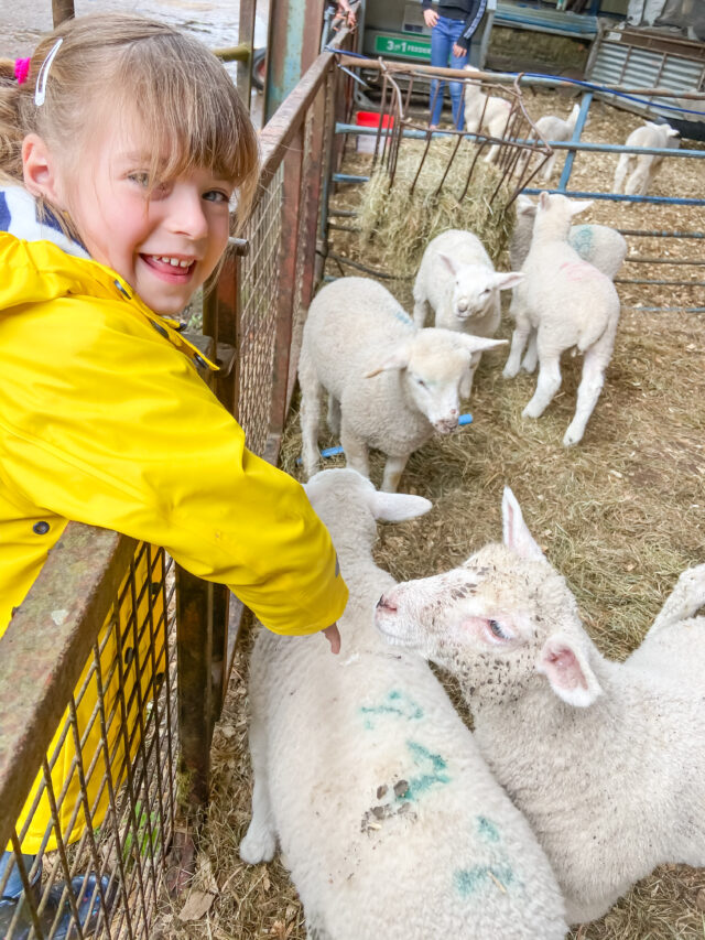 Sheep barn at Feather Down farm