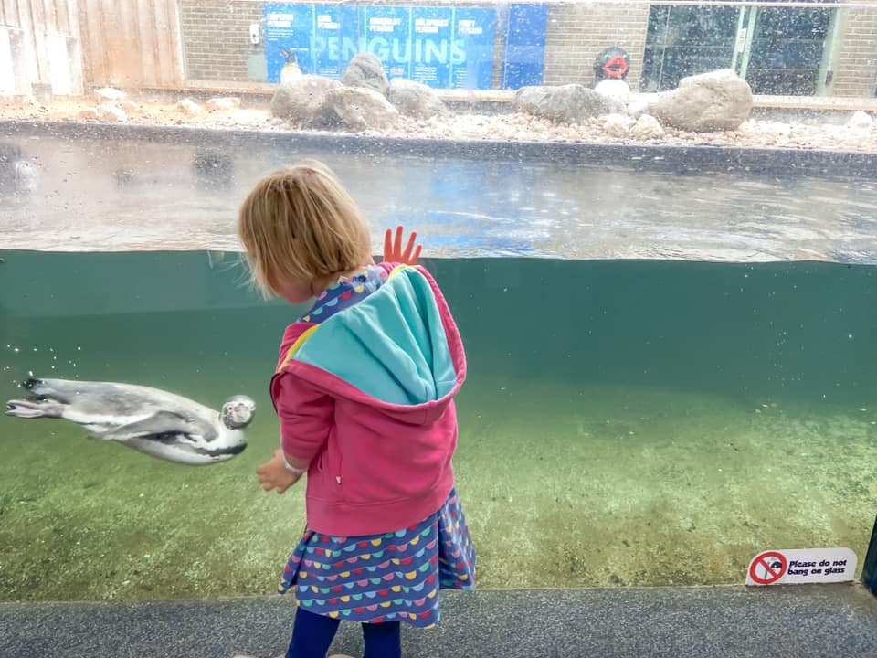 Toddler looking at penguins and laughing at the Sealife centre in Southend - things to do in essex