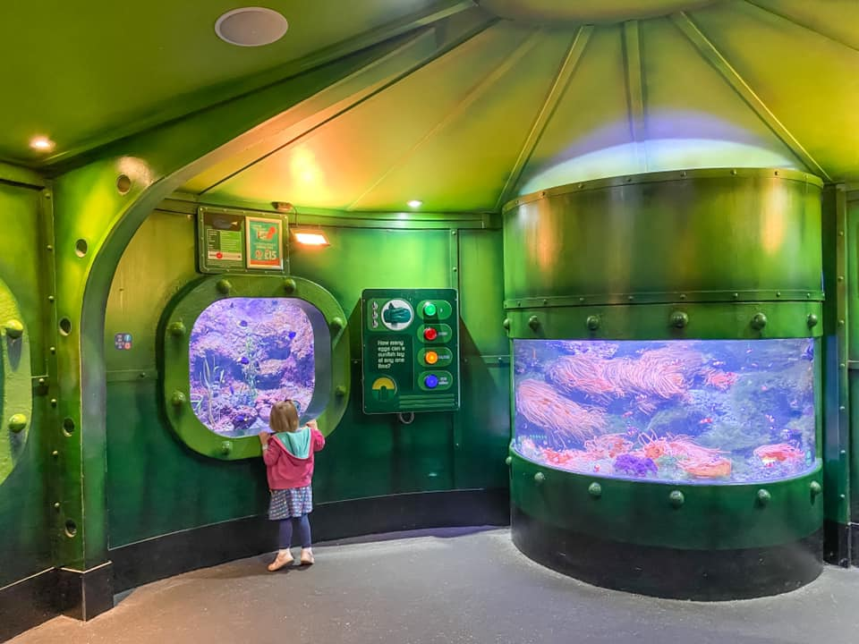 Toddler looking at fish at the Sealife centre in Southend - things to do in essex