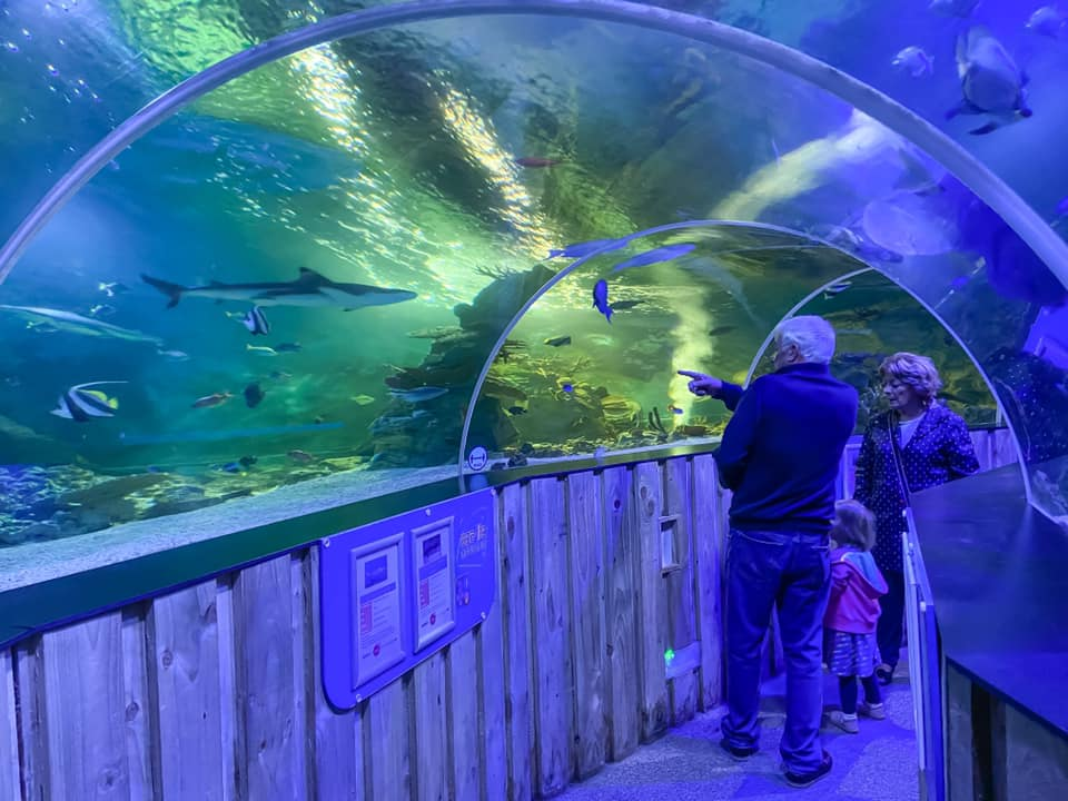Sealife centre tunnel with sharks - three people looking at the fish. Things to do in essex