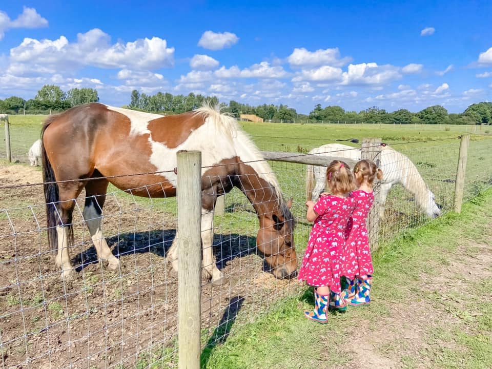 two girls in pink dresses looking at a brown and white horse behind a fence