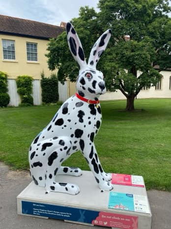 Dalmation extra large hare