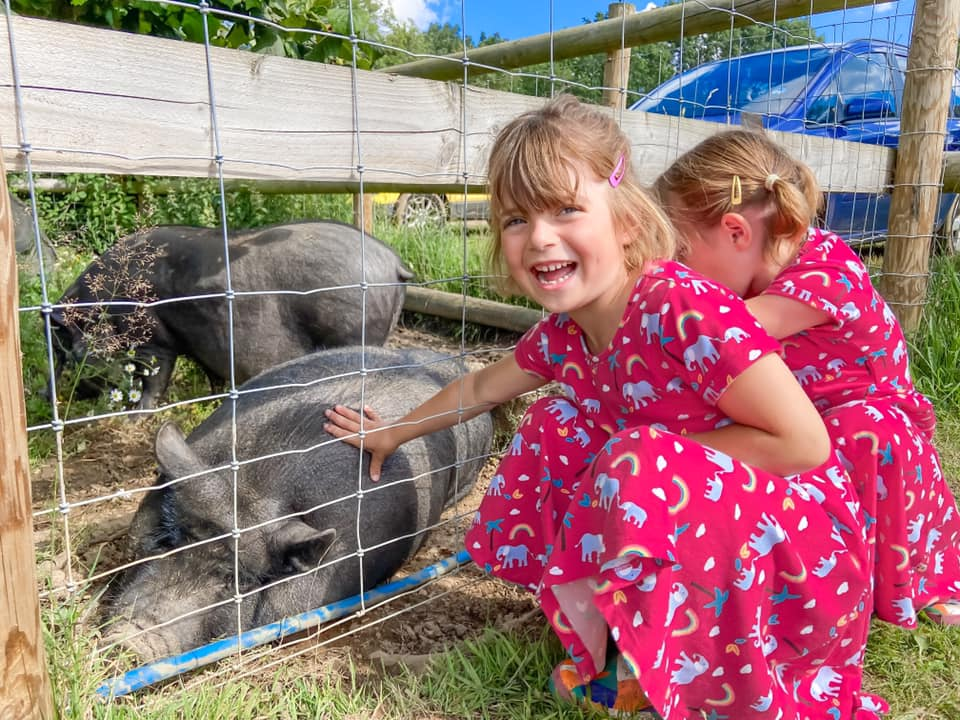 two girls in pink dresses looking at black pig behind a fence