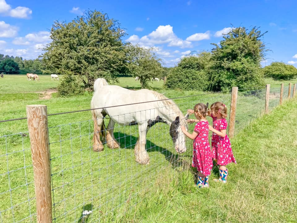 two girls in pink dresses stroking a white horse