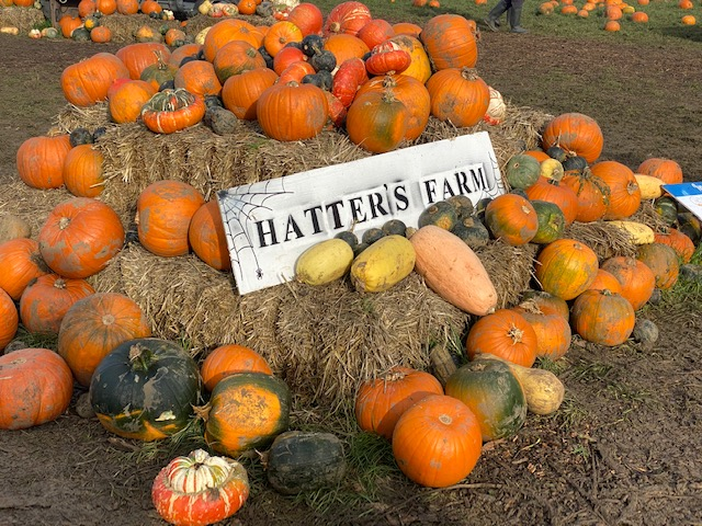 Hatters Farm pumpkin patches in Essex