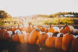 pumpkin patches in Essex
